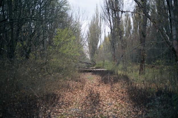 Herfstbos in pripyat in tsjernobyl Premium Foto