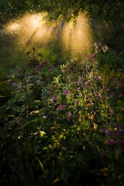 Het avondlicht schijnt over groen gras en veldbloemen Gratis Foto