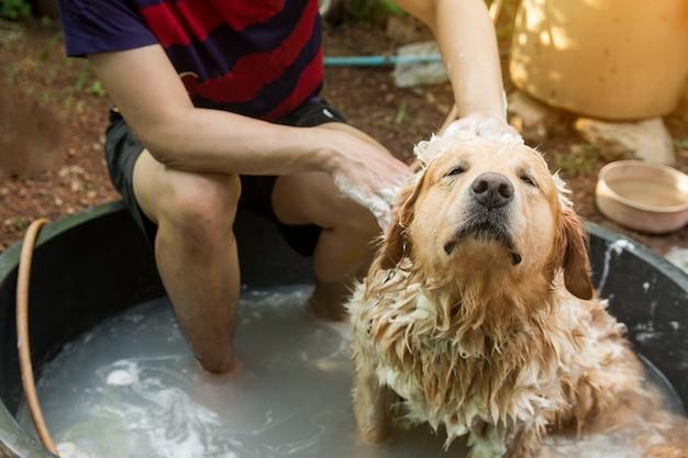 Het baden van hond, gouden retriever die van de hond een douche neemt en haar met water en zeep wast Premium Foto