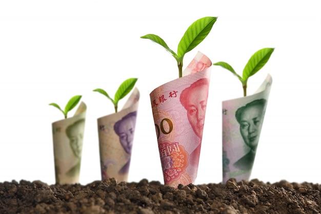 Het beeld van bankbiljetten rolde rond installaties op grond voor zaken, besparing, de groei, economisch geïsoleerd op wit Premium Foto