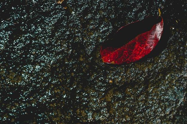 Het beeld van rode bladeren onder het water stroomt door natuurlijk concept met kopie ruimte Premium Foto