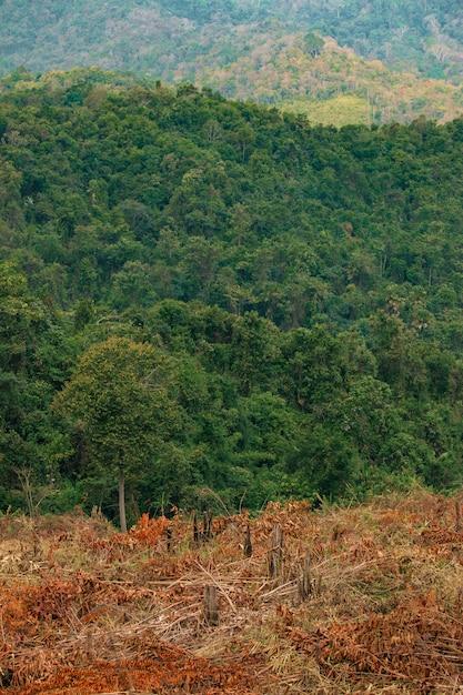 Het concept van ontbossing bestaat uit verwoeste bossen en overvloedige bossen. Premium Foto