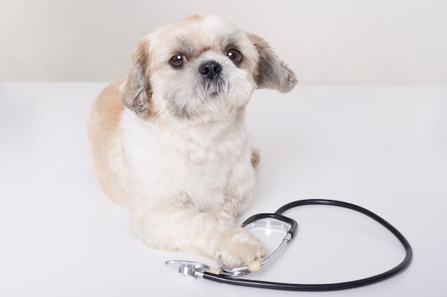 Het grappige dierenarts hond geïsoleerd liggen Gratis Foto