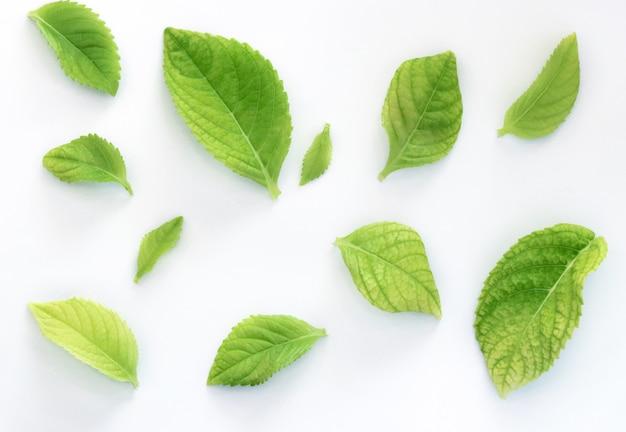 Het groene verlof isoleert patroon op witte achtergrond Premium Foto
