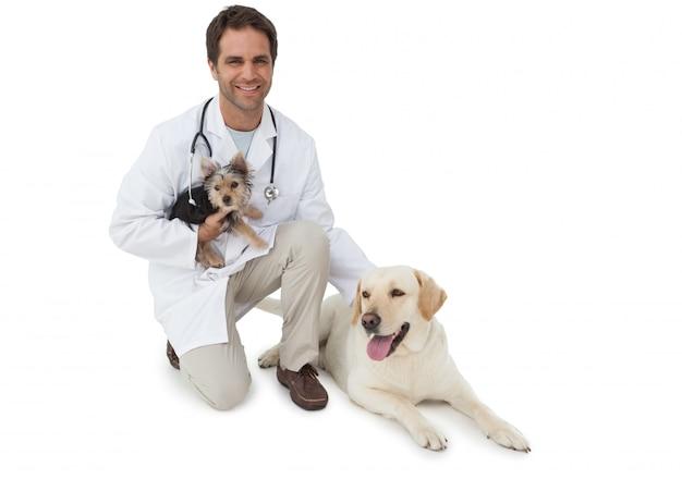 Het knappe dierenarts stellen met de terriër van yorkshire en geel labrador op witte achtergrond Premium Foto