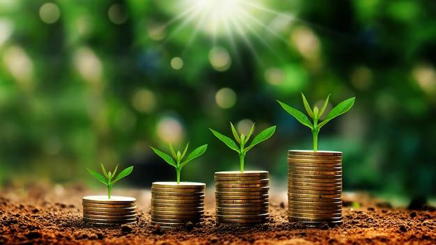 Het kweken van installaties op muntstukken die op groene vage achtergronden en natuurlijk licht worden gestapeld met financiële ideeën. Premium Foto