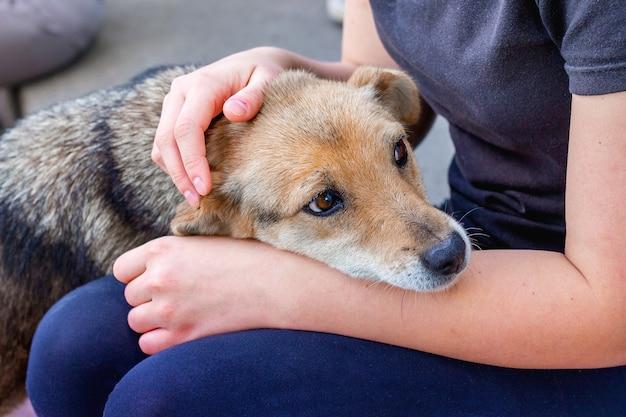 Het meisje geeft om een zieke hond Premium Foto
