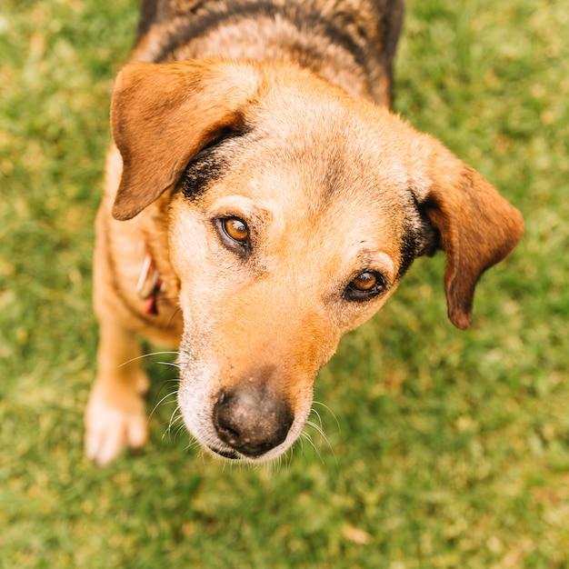 Het mooie hond stellen in de tuin Gratis Foto