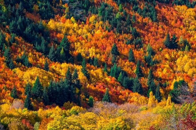 Het mooie kleurrijke groene geeloranje en rode bos van de herfstbomen op de heuvel. Premium Foto