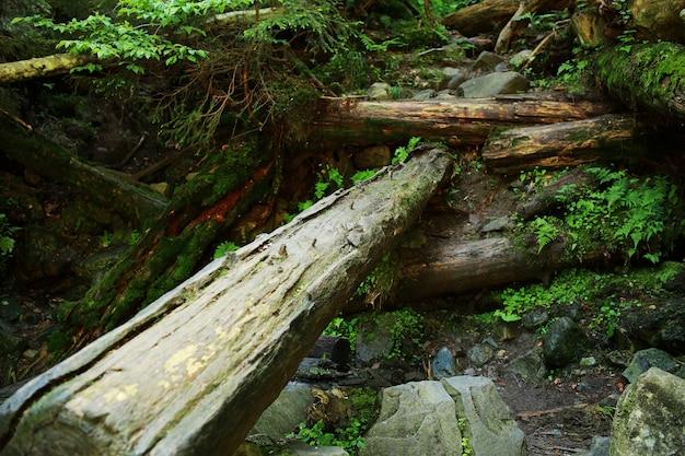 Het mos bedekte rotsen en omgevallen bomen een oud bos Premium Foto