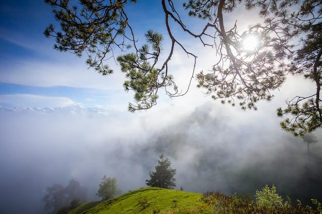 Het nevelige landschap van de bergzomer met pijnboomboom Premium Foto