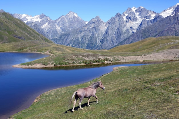 Het paard loopt op het gras in de buurt van het meer met bergen Premium Foto