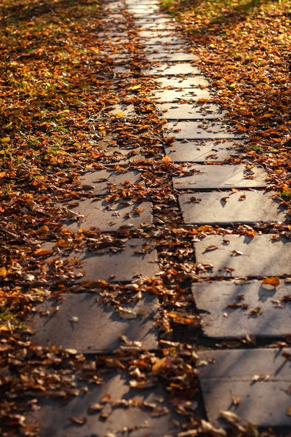 Het pad is bedekt met gele bladeren. Premium Foto
