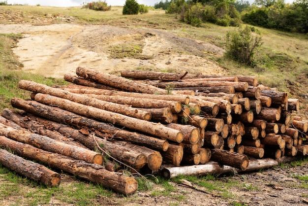Het pijnboomhout opent bos het programma Premium Foto