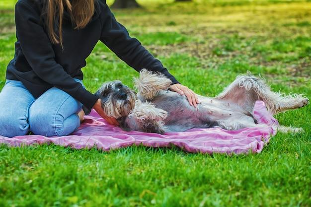 Het portret van eigenaar en de ruwe colliehond geniet van, rustend en petting samen op stadsstraat. Premium Foto