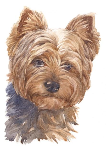 Het schilderen van de waterverf van kleine honden, bruine veren, yorkshire terrier Premium Foto