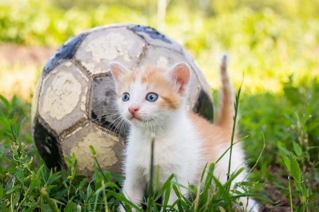 Het spelende bal van de kat Premium Foto