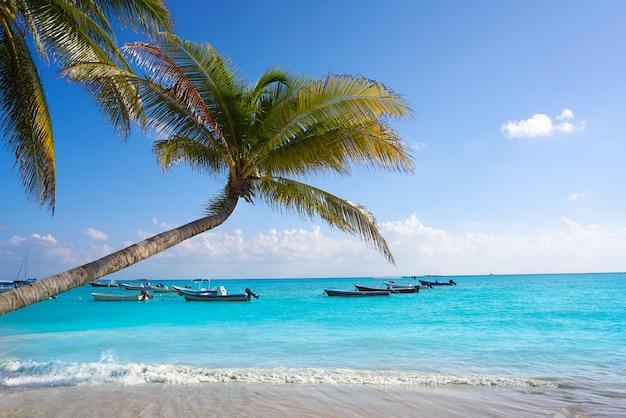 Het strandpalmen mexico van playa del carmen Premium Foto