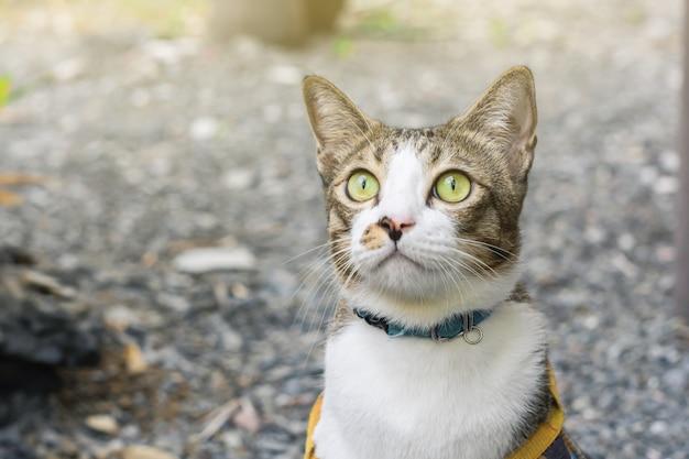 Halsband kat hier online bestellen | Huisdierplezier