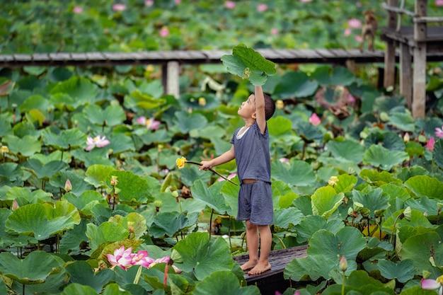 Het vietnamese jongen spelen met de roze lotusbloem over de traditionele houten boot in het grote meer Premium Foto