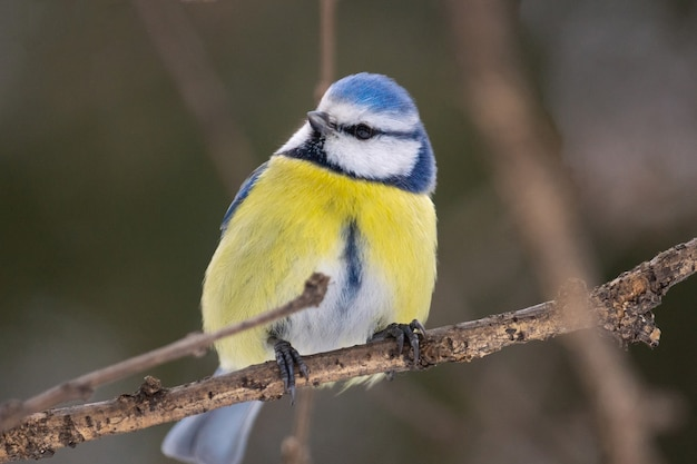 Het vogelpark in de winter Premium Foto