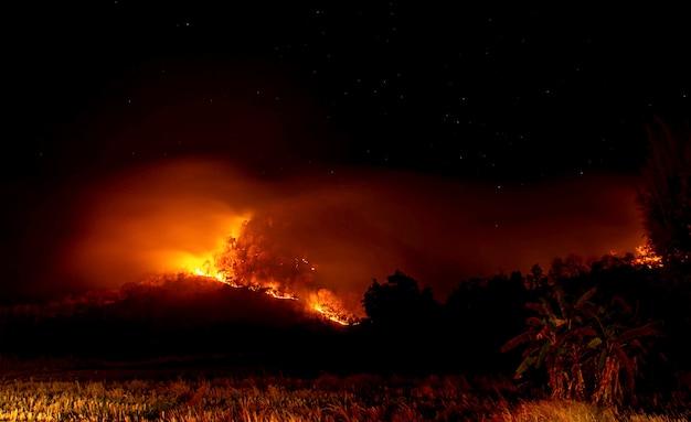 Het vuur brandde 's nachts bomen op de berg met alle sterren aan de hemel. Premium Foto