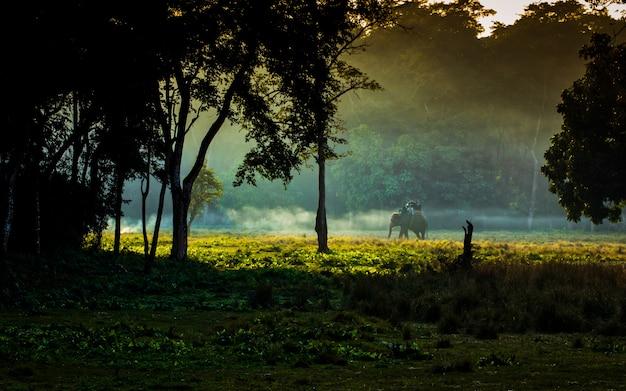 Het wild dierlijke olifant bij het nationale park van chitwan, nepal. Premium Foto