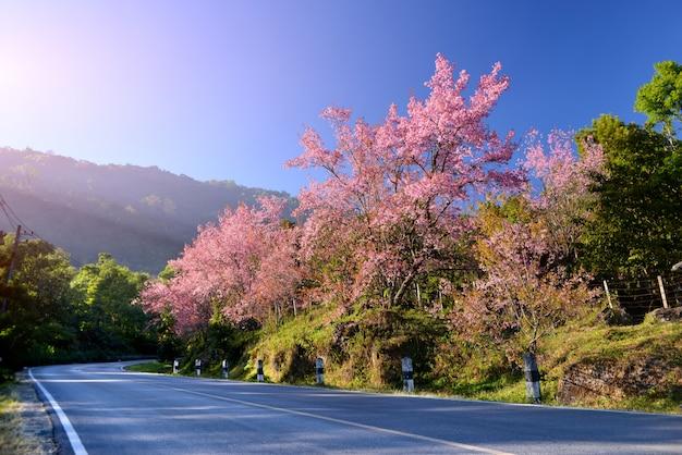 Het wilde himalayan-kersenbloesem bloeien. Premium Foto