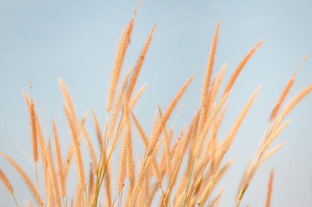 Het zonlicht van het het graseffect van de bloem in de herfst Premium Foto