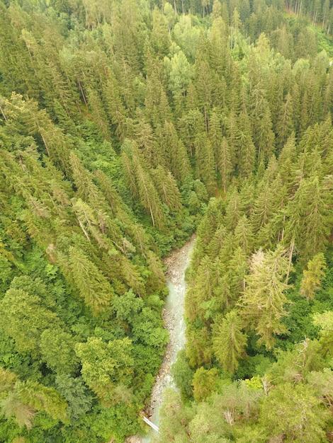 High-angle shot van een dennenbos met een stroom stromend water Gratis Foto