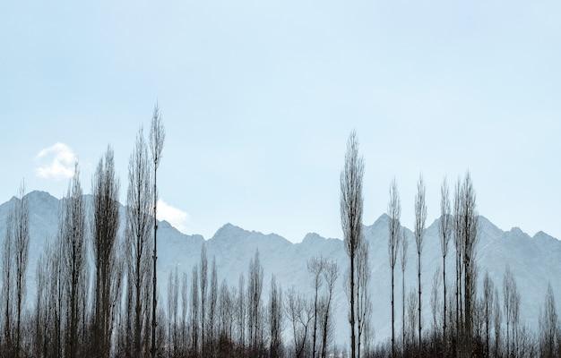 Himalayagebergte bereik met heldere blauwe lucht en schaduw en boom frame Premium Foto