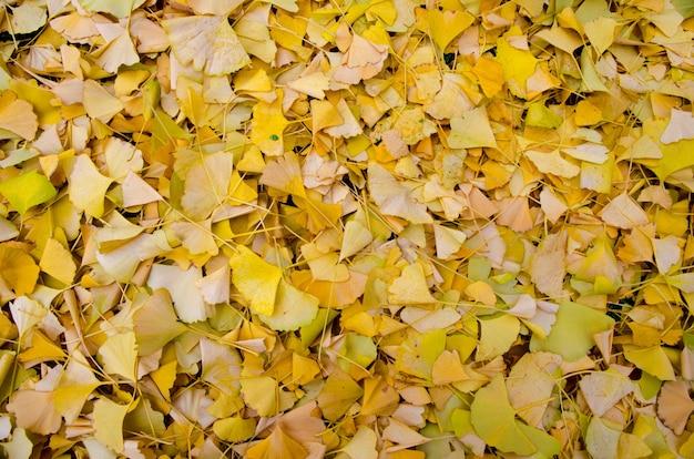 Hoge hoek close-up shot van gevallen gele bladeren verspreid over de grond Gratis Foto