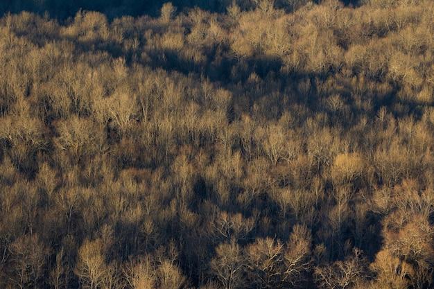 Hoge hoek die van een groot bos van droge bomen in istria, kroatië is ontsproten Gratis Foto