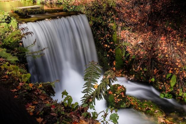 Hoge hoek die van een waterval in een bos in karuizawa is ontsproten. tokio, japan Gratis Foto