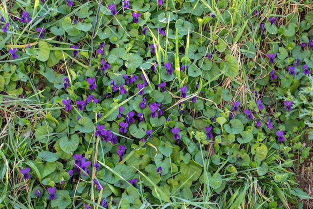 Hoge hoek die van violette bloemen en groene bladeren overdag is ontsproten Gratis Foto