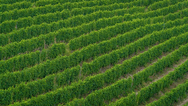 Hoge hoek opname van een veld van nieuw geplante groene bomen - perfect voor een artikel over wijnmaken Gratis Foto