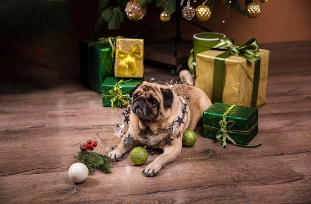 Hoge hoek schattige hond opletten op geschenken Gratis Foto