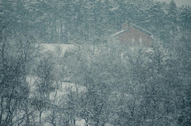 Hoge hoek shot van de bomen in het bos bedekt met sneeuw tijdens de sneeuwvlok Gratis Foto