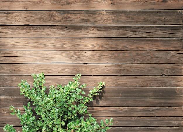 Hoge hoek shot van een groene plant op een houten oppervlak Gratis Foto