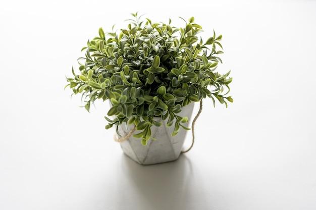 Hoge hoek shot van een plant pot op een witte ondergrond Gratis Foto
