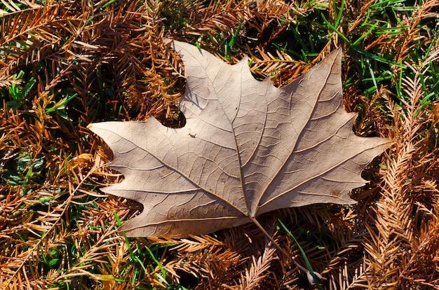 Hoge hoek shot van een prachtig herfstblad gevallen op de met bladeren bedekte grond Gratis Foto