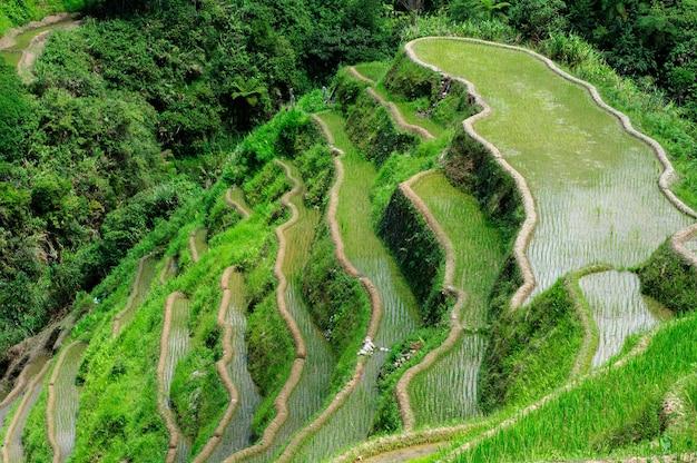 Hoge hoek shot van een prachtig landschap in banaue rice terraces, ifugao province, filippijnen Gratis Foto