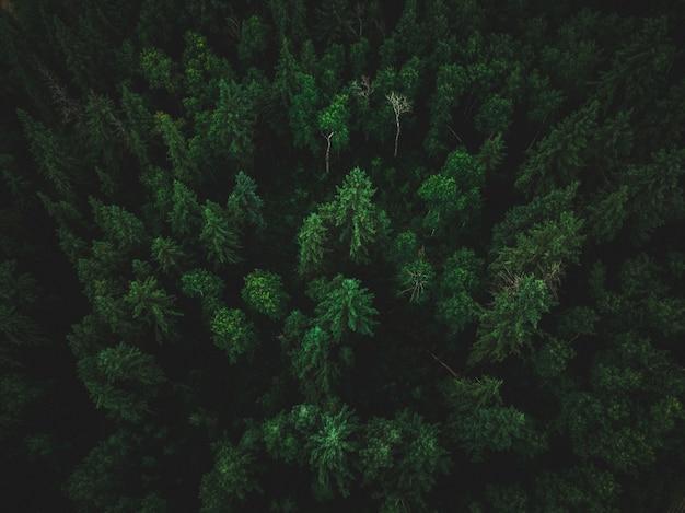 Hoge hoek shot van een prachtige tropische jungle met exotische hoge bomen Gratis Foto