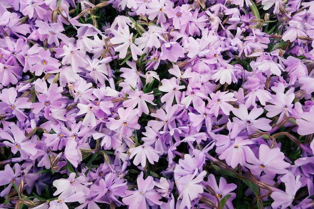 Hoge hoek shot van prachtige paarse bloemen in een veld vastgelegd op een zonnige dag Gratis Foto