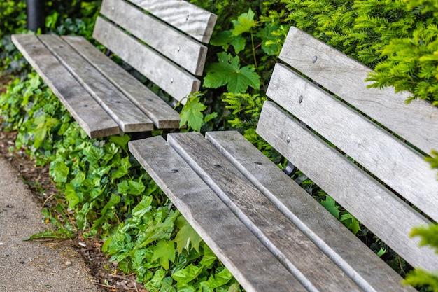 Hoge hoek shot van twee houten banken omgeven door prachtige groene planten op een park Gratis Foto