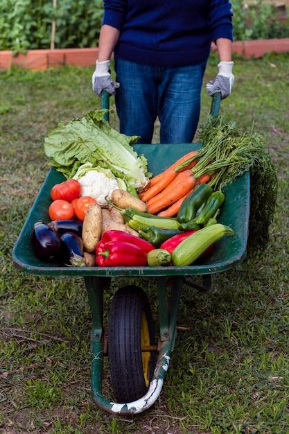 Hoge hoek tuinman bedrijf kruiwagen met groenten Gratis Foto