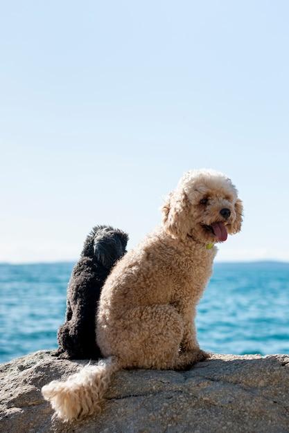 Hoge hoek twee honden op zee Gratis Foto