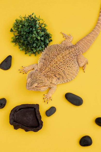 Hoge hoek van leguaan met vegetatie en rotsen Gratis Foto