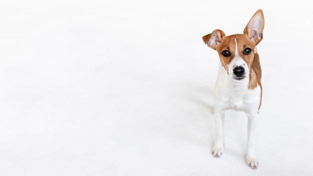 Hoge hoek van schattige hond met kopie ruimte Gratis Foto