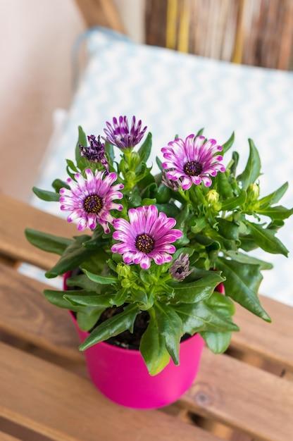 Hoge hoek verticale close-up shot van bloeiende roze bloemen in een roze bloempot Gratis Foto